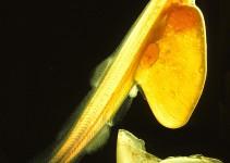 olio di krill e omega 3