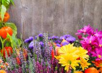 i significati delle varie piante
